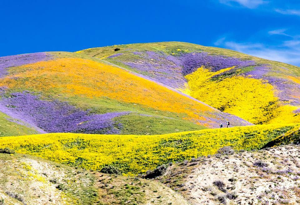Fields of flowers