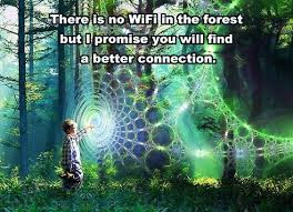 There is no WiFi in the forest, but I promise you will find a better connection.