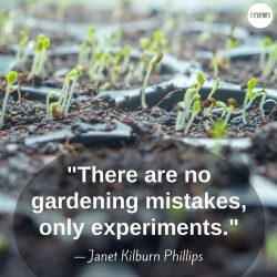 There are no gardening mistakes, only experiments - Janet Kilburn Phillips
