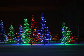 Christmas Trees lit up