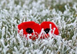 pic-poppies-in-the-snow_orig