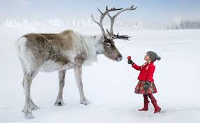 Girl and Reindeer
